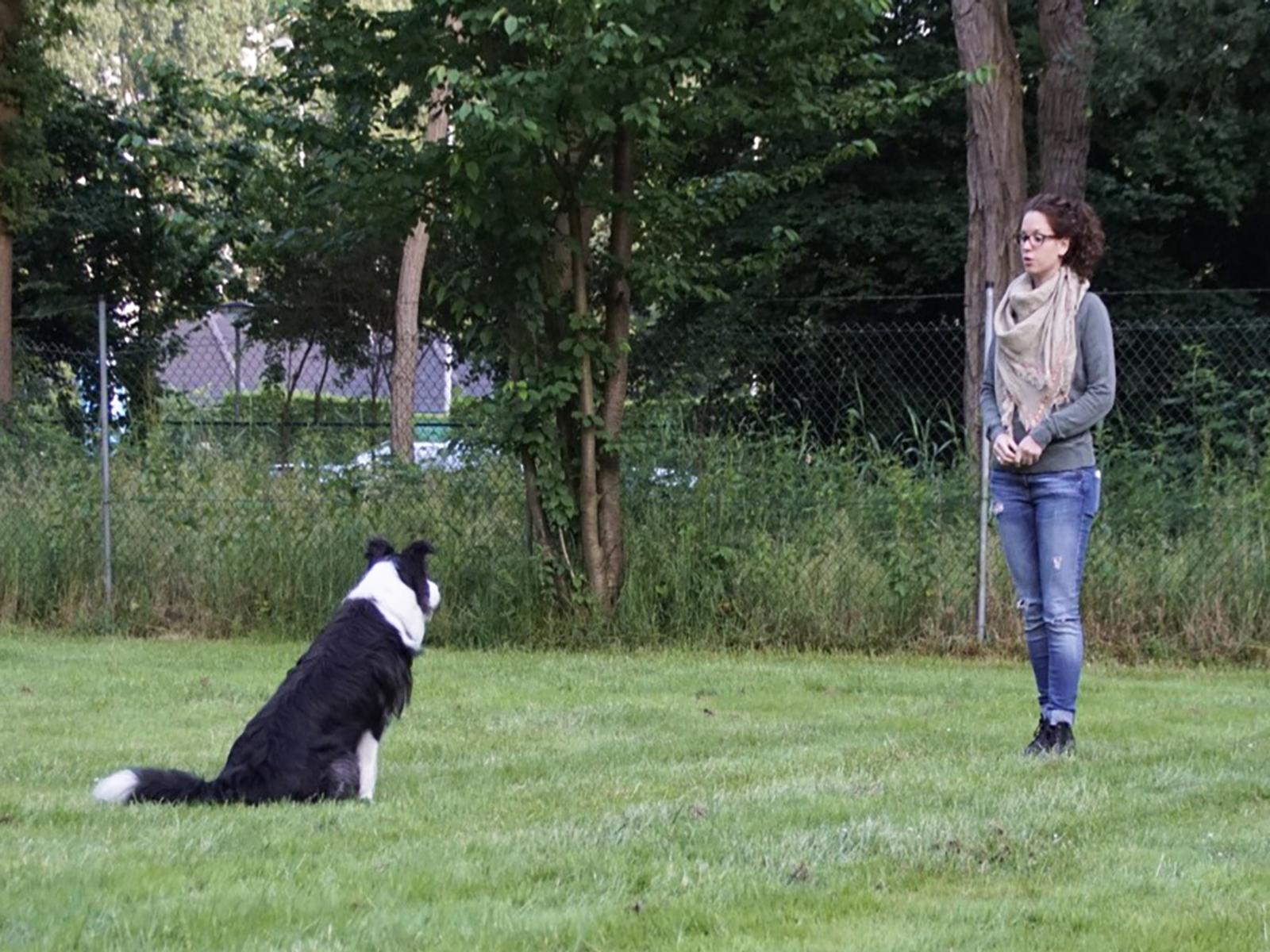 Hondenschool Vught Vervolg 2