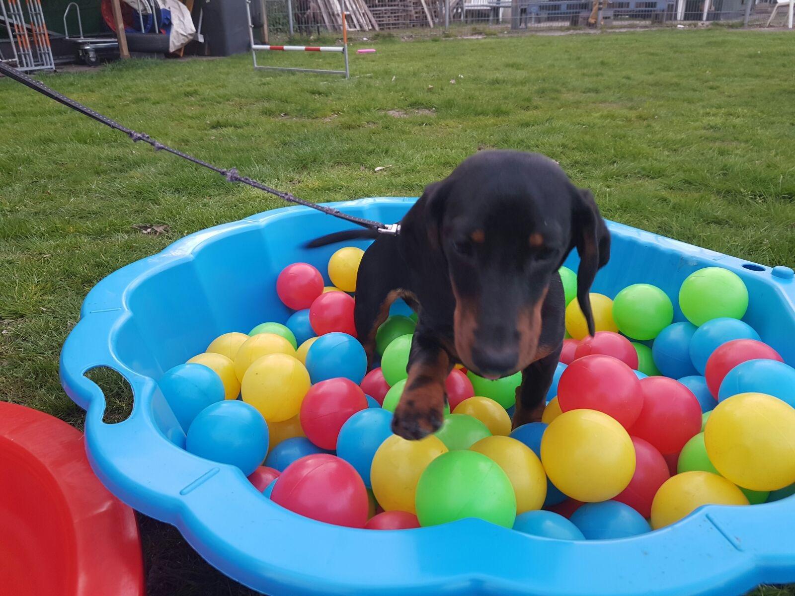 hondenschool vught puppy socialisatie cursus